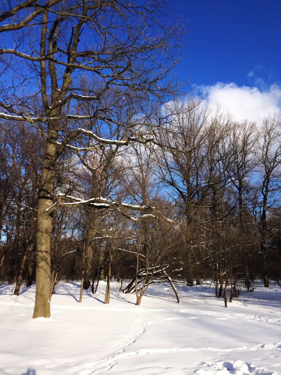 Мороз и солнце: что делать в Ботаническом саду имени Цицина зимой