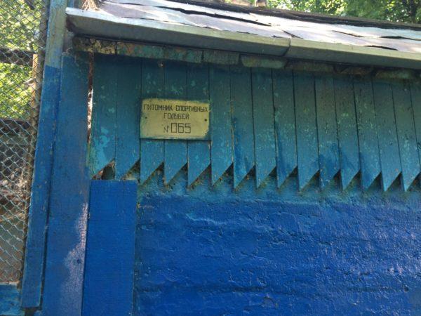 Голубятни Москвы: голуби-спортсмены, питомники, заводчики и их «тренировочные базы»